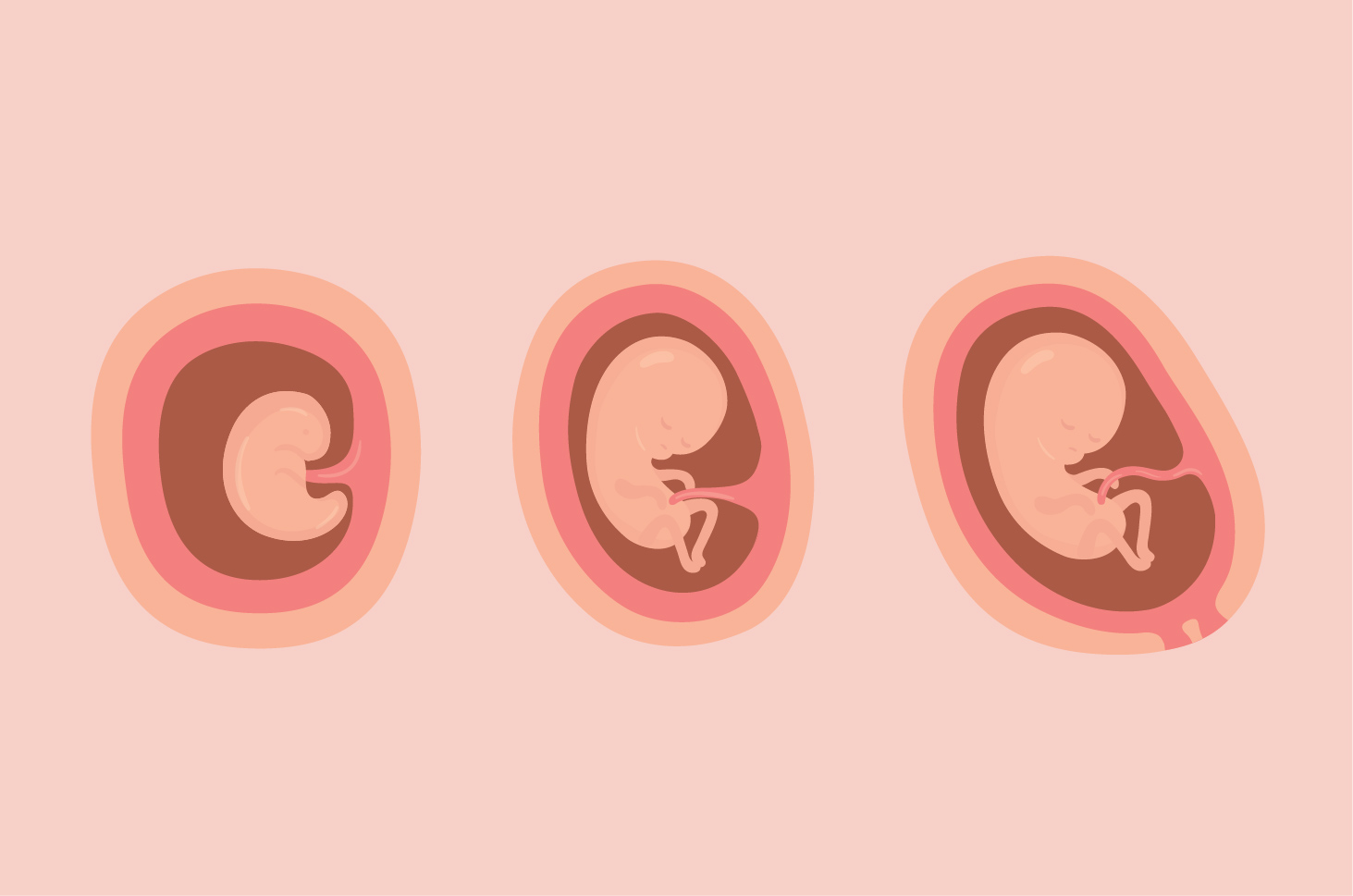 Trimester kehamilan
